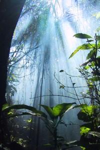 nature_041